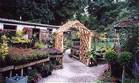 Cornish Nurseries: Rose Arbour