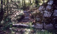 Tamar Valley Gorge: Steps